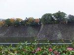 2014皇居紅葉狩り12.jpg