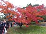 2014皇居紅葉狩り9.jpg