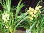 2015春の花1.jpg