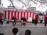 2015柏尾川花見1.jpg