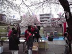 2015柏尾川花見2.jpg