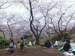 2016三ツ池公園10.jpg