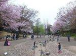 2016三ツ池公園12.jpg
