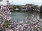 2016三ツ池公園3.jpg