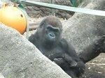 2016上野動物園15.jpg