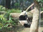 2016上野動物園4.jpg