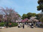 2016上野花見10.jpg