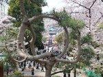 2016上野花見14.jpg
