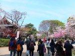 2016上野花見15.jpg