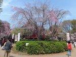 2016上野花見2.jpg