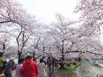 2016上野花見26.jpg