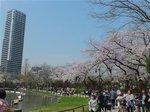 2016上野花見27.jpg