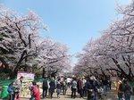 2016上野花見4.jpg