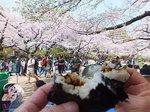 2016上野花見5.jpg