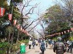2016上野花見6.jpg