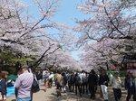 2016上野花見7.jpg