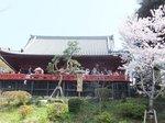 2016上野花見8.jpg