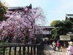 2016上野花見9.jpg