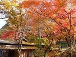 2016東海の紅葉巡り116.jpg