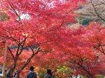 2016東海の紅葉巡り117.jpg