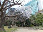 2016浜離宮2.jpg