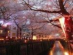 2016目黒川夜桜10.jpg