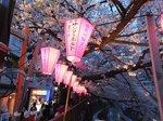 2016目黒川夜桜6.jpg