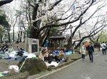 2017飛鳥山花見11.jpg
