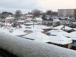 2018大雪8.jpg