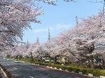 2019国立花見8.jpg