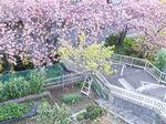 2019富士山と春の花2.jpg