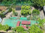 2020夏菜園.jpg