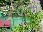 2020夏菜園ぶどう棚1.jpg