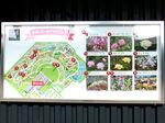 2020花菜ガーデン3.jpg